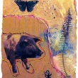 flordia_butterfly_pig_b